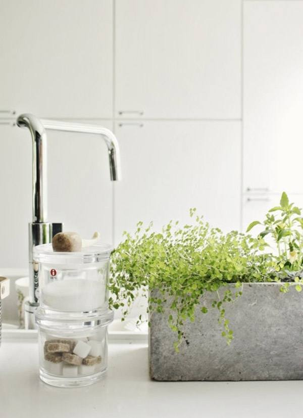 Best plants for bathrooms – 20 indoor plants for the bathroom