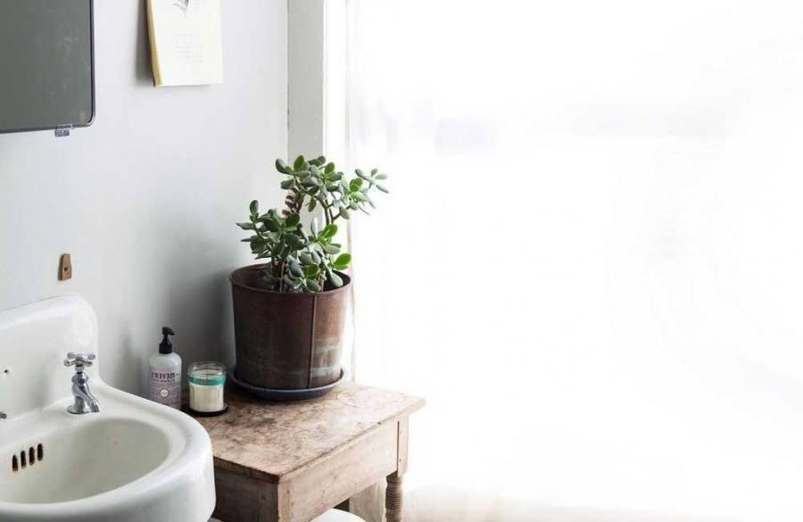 good bathroom plants