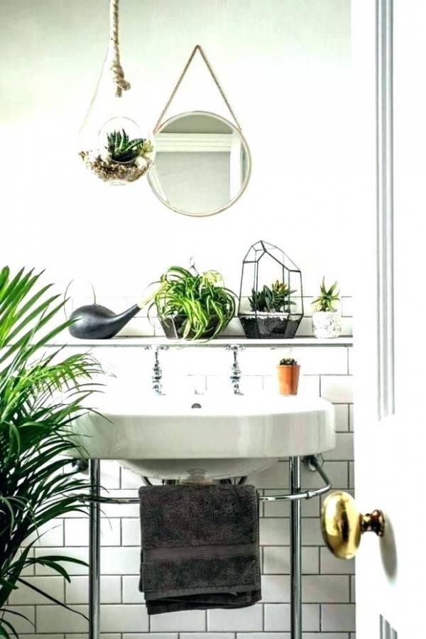Most houseplants