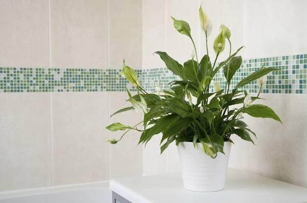 best indoor plants decor ideas for your luxury bathroom plant