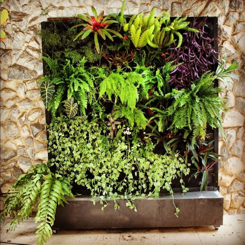 Tropical Collection plants · Tropical Living Wall plants