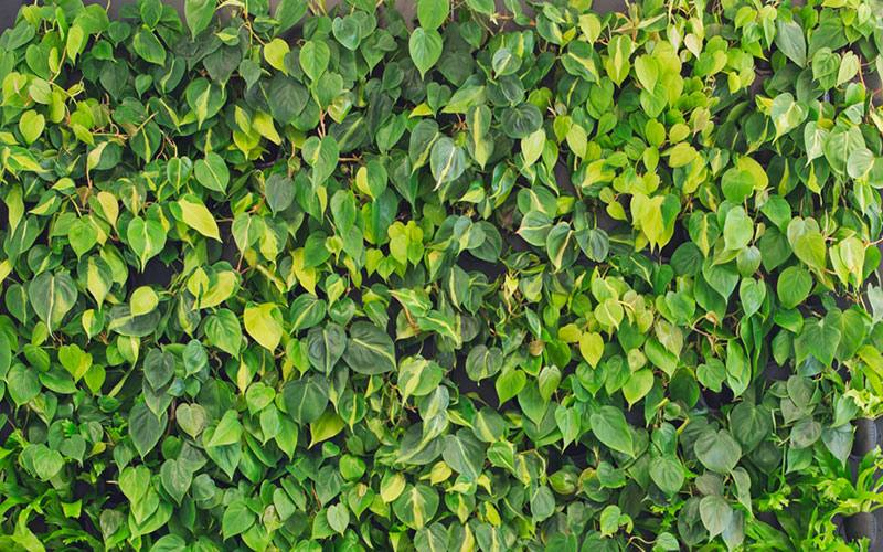 plants for a living wall decoration outdoor living walls plants replica wall fake with regard to